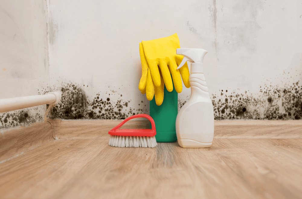 Best mold remover reviews