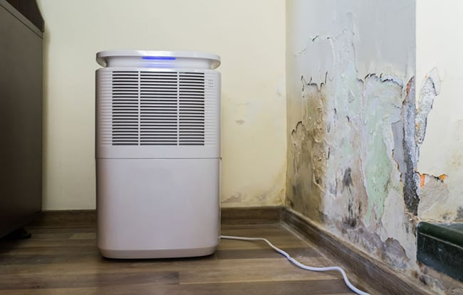dehumidifier and air purifier which is best for mold