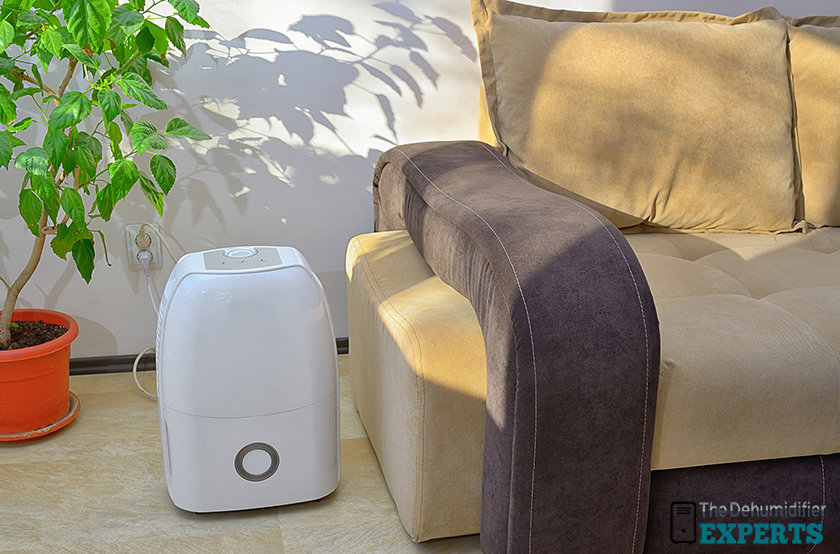 use a dehumidifier to prevent mold from growing