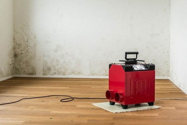 does a dehumidifier help with mold