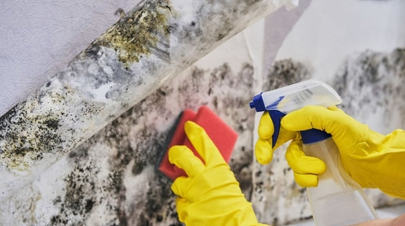 get rid of mold in basement walls