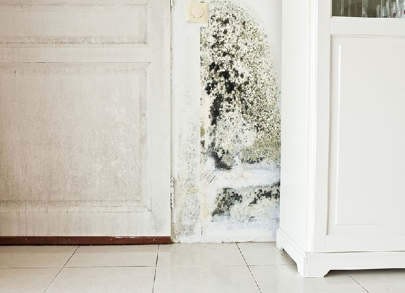 mold growth in basement