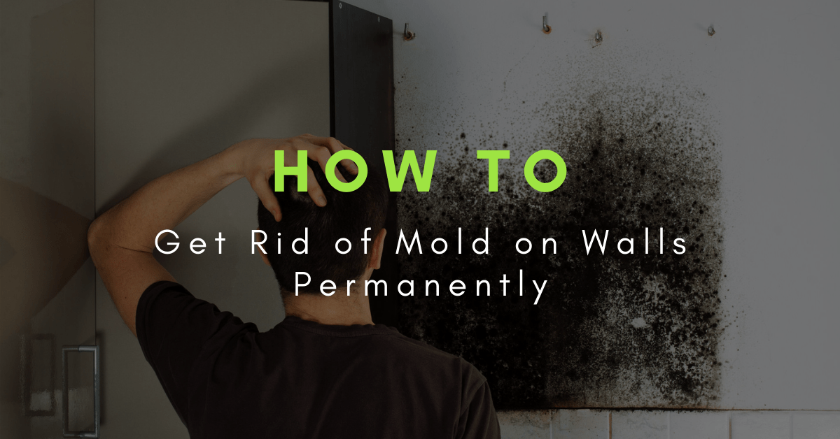 how to kill mold on walls permanently
